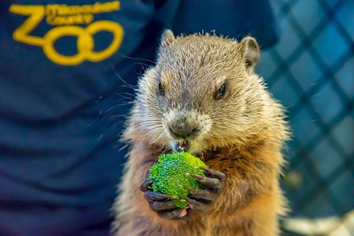 Gordy the Groundhog