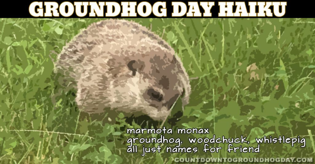 marmota monax&nbsp, groundhog, woodchuck, whistlepig, all just names for friend